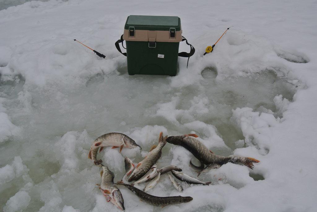 Зимняя рыбалка — р. Березовая