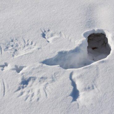 Охота на тетерева из лунок: декабрь